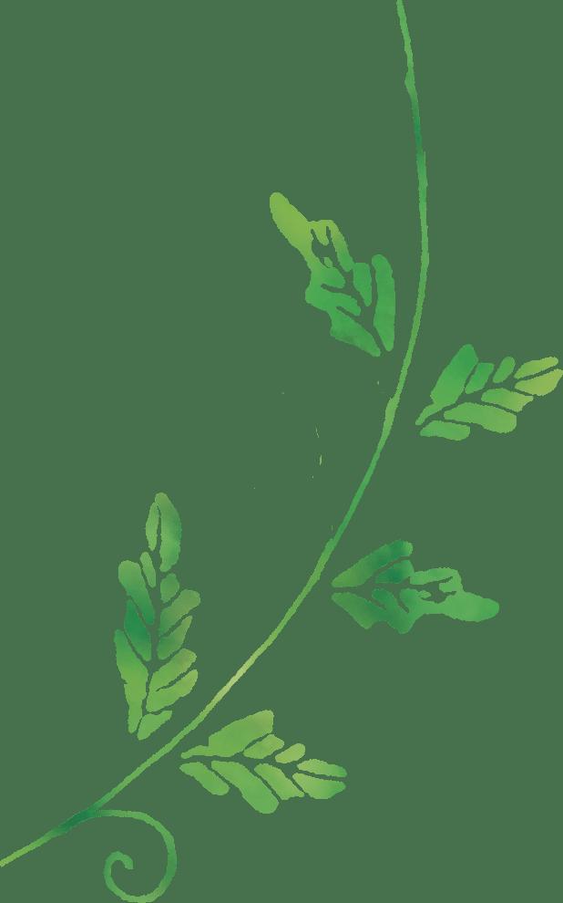 ひまわりの茎